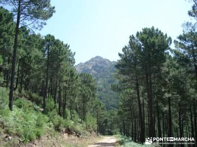 Pinares de Piedralaves; club de montaña madrid club montaña madrid federacion montaña madrid
